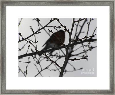 Winter Bird Framed Print