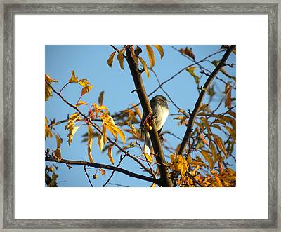 Framed Print featuring the photograph Winter Bird by Teresa Schomig