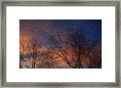 Winter Birds Framed Print by Utah Images