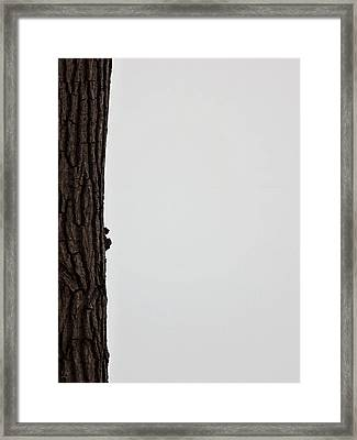 Winter Blahs  Framed Print