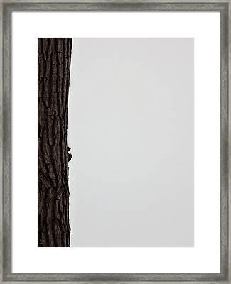 Winter Blahs  Framed Print by Debi Dmytryshyn