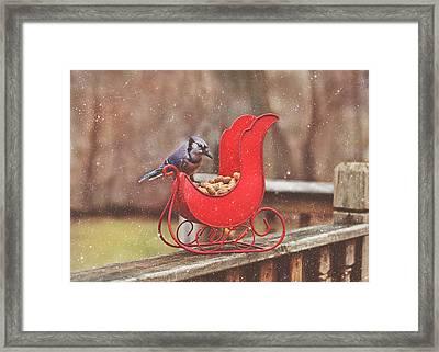 Winter Blue Jay #3 Framed Print