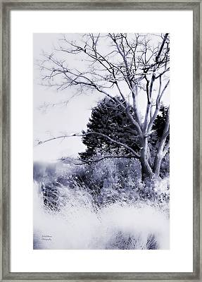 Winter Blue  Framed Print by Julie Palencia