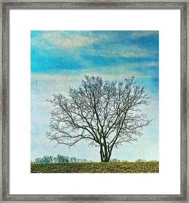 Winter Blues Framed Print by Gary Slawsky