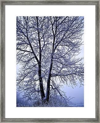 Winter Tree In Blue Fog Framed Print
