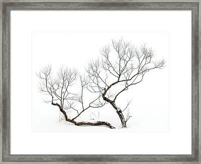 Winter Bonsai Framed Print
