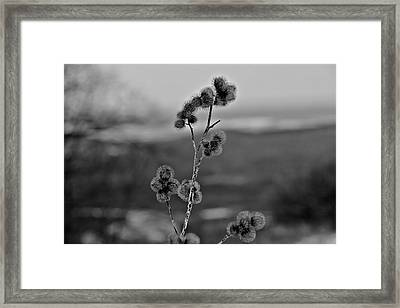 Winter Boogers Framed Print by Jahred Allen
