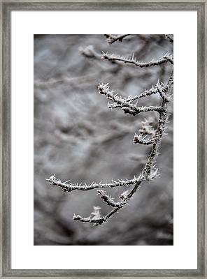 Winter Branch Framed Print by Mary Katherine Powers