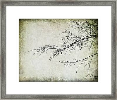 Winter Branch Framed Print by Suzanne Barber
