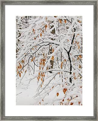 Framed Print featuring the photograph Winter Branches by Ann Horn