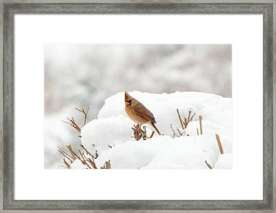 Winter Break Framed Print