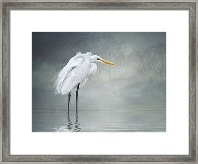 Winter Breeze Framed Print by Brian Tarr