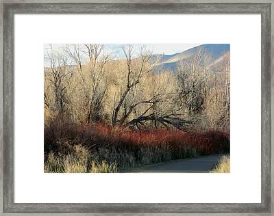 Winter Browns Framed Print
