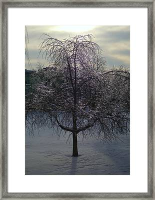 Winter Candelabrum Framed Print