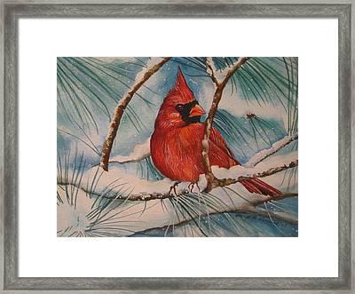 Winter Cardinal Framed Print by Cheryl Borchert