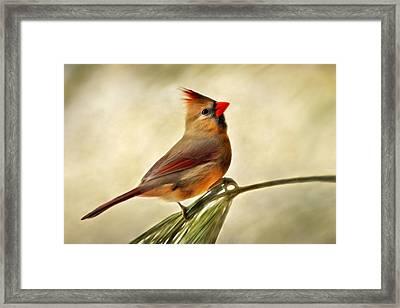 Winter Cardinal Framed Print by Christina Rollo