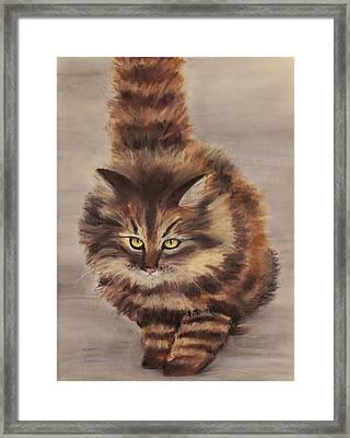 Winter Cat Framed Print by Anastasiya Malakhova