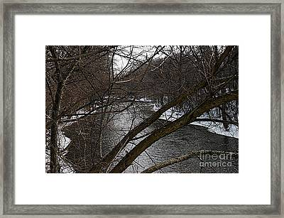 Winter Cedar Framed Print