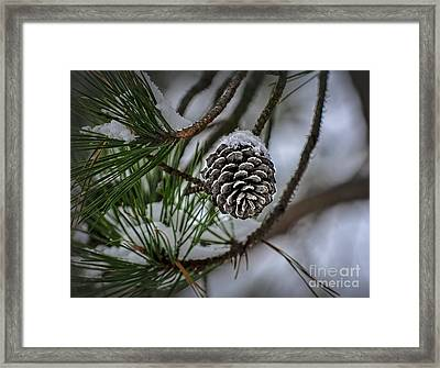 Framed Print featuring the photograph Winter Coat by Brenda Bostic