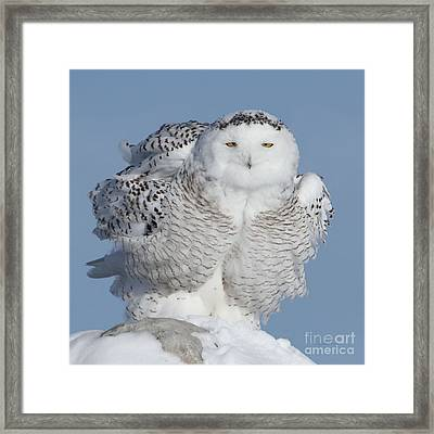 Winter Coat Framed Print by Heather King