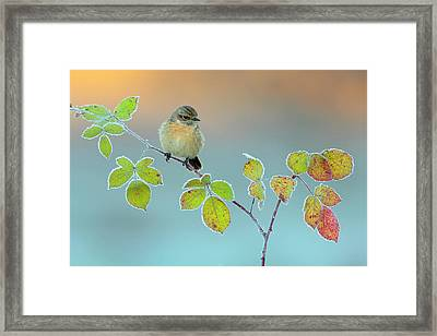 Winter Colors Framed Print by Andres Miguel Dominguez