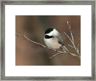 Winter Contemplation Framed Print