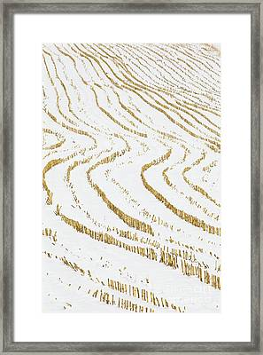 Framed Print featuring the photograph Winter Cornfield by Alan L Graham