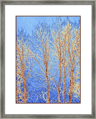Winter Cottonwoods Abstract Framed Print by Will Borden
