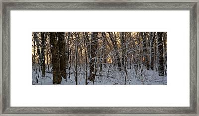 Winter Dawn Framed Print