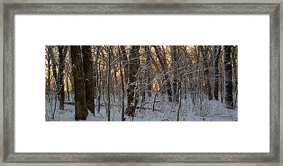 Winter Dawn Framed Print by Bruce Morrison