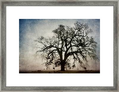 Winter Dawn Tree Silhouette Framed Print by Carol Leigh