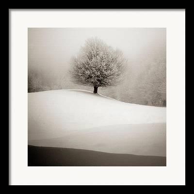 Snowy Woods Framed Prints