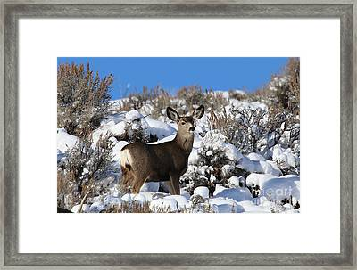 Winter Doe Framed Print by Marty Fancy