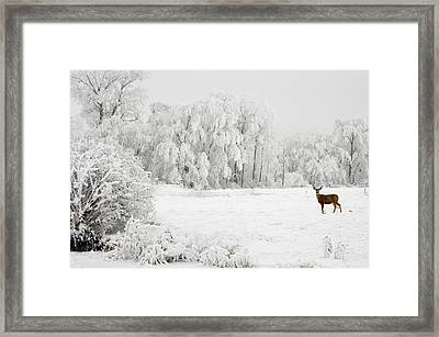 Winter Doe Framed Print by Mary Jo Allen