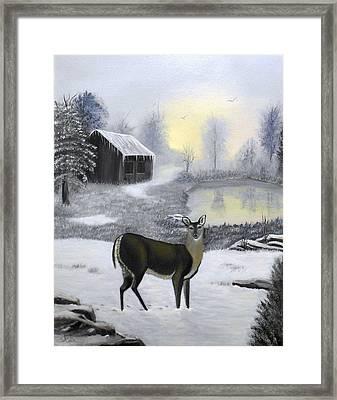 Winter Doe Framed Print