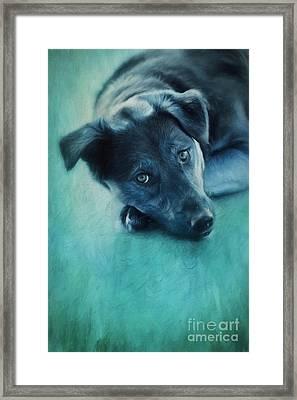 Winter Dog Framed Print