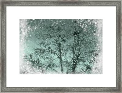 Winter Doves Framed Print by Diane Alexander