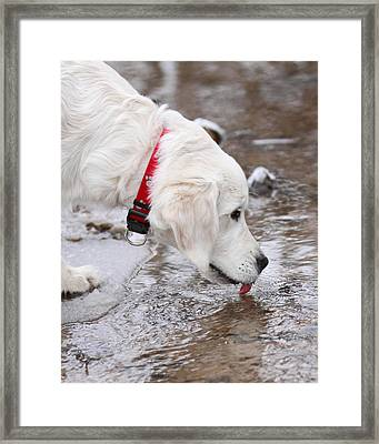 Winter Drink Framed Print by Coby Cooper
