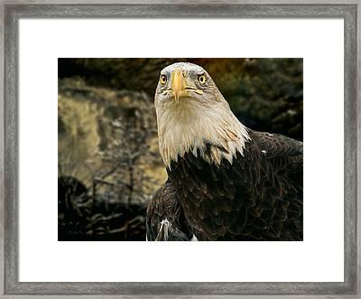 Winter Eagle Framed Print by Bob Orsillo