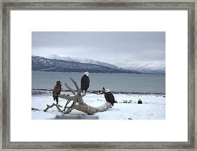Winter Eagles Framed Print