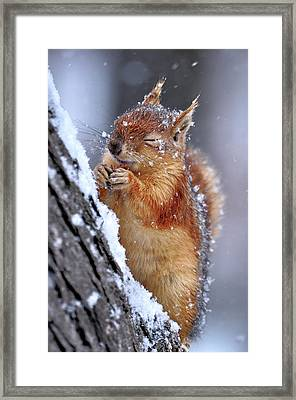 Winter Framed Print by Ervin Kobak?i