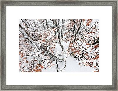 Winter European Beech Forest In Vosges Framed Print by Heike Odermatt