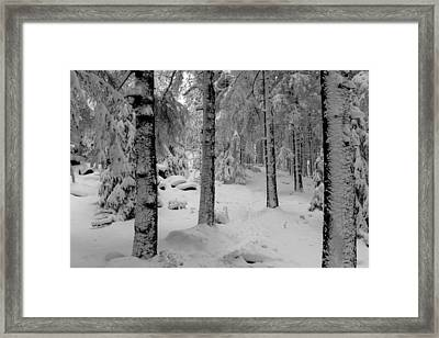Winter Fairy Tale Forest Framed Print by Andreas Levi