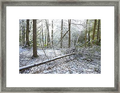 Winter Fallen Tree Framed Print by Thomas R Fletcher