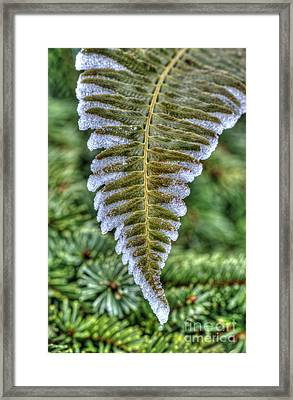 Winter Fern Framed Print