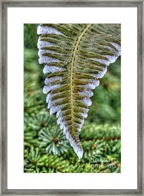 Winter Fern Framed Print by Sarah Schroder