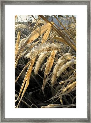 Winter Fields Framed Print by Daniel Kasztelan