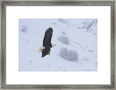 Winter Flight Framed Print by Mike  Dawson