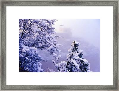 Winter Flight Of Raven Framed Print