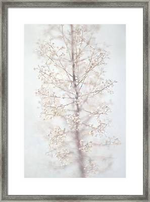 Framed Print featuring the photograph Winter Flower by Suzanne Powers